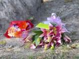 Ni�os asesinados en Australia