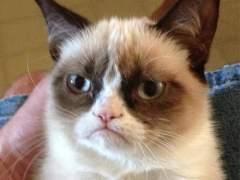 'Grumpy Cat' tendr� su figura en el museo de cera de San Francisco