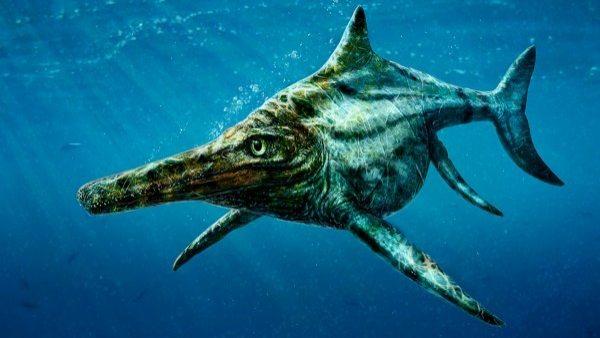 Dearcmhara Shawcrossi, nueva especie de reptil marino de la isla de Skye, Escocia