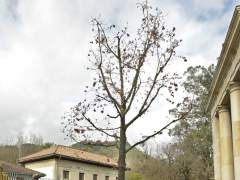 Árbol de Gernika