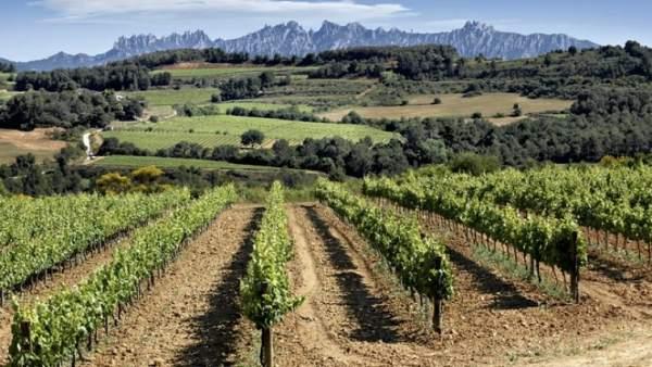 Vilafranca del Penedès, enoturismo y rutas de naturaleza en tiempo de vendimia