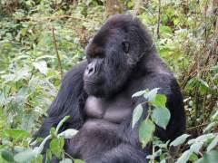 De niño soldado a jugarse la vida para salvar a los gorilas de Virunga