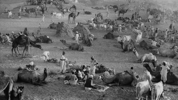 Camel Market, Nagaur, Rajasthan, India; 1956