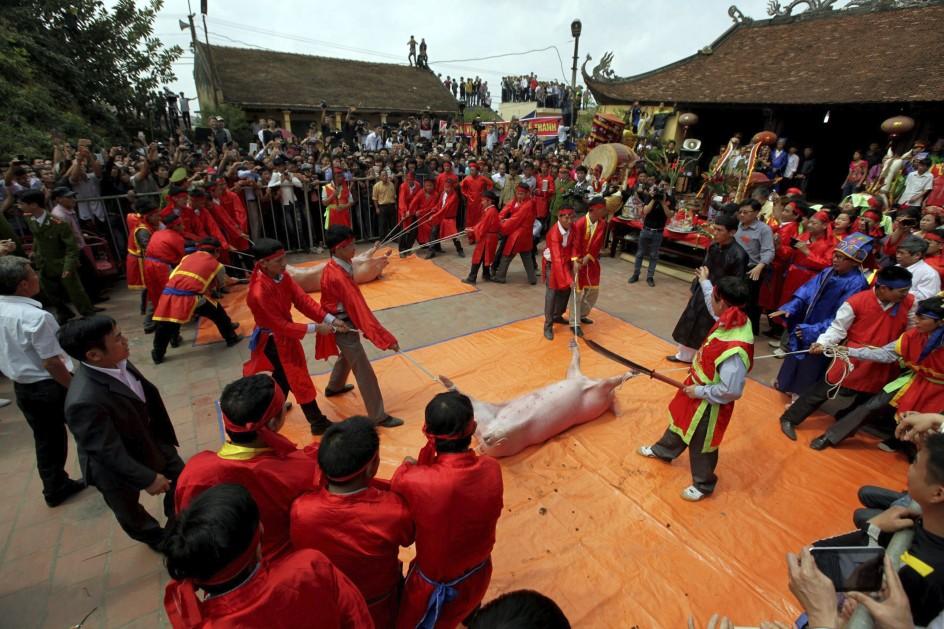 'Festival del cerdo' en Vietnam