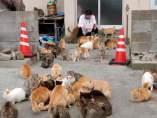 Jap�n tiene una isla 'poblada' por gatos