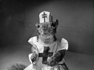 A squirrel wearing a baby doll's nursing uniform