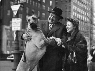 Metropolitan Opera's Heldontenor Lauritz Melchior and His Wife with Their Great Dane, NYC 1944. From the series 'City Dogs'.
