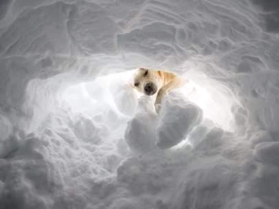 Campeonato de perros de rescate