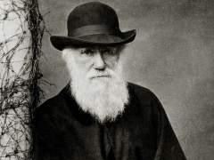"""Científicos resuelven el """"abominable misterio"""" de Darwin sobre las plantas"""