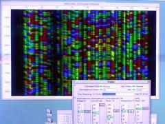 Cient�ficos descubren un nuevo mecanismo de reparaci�n del ADN