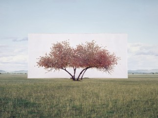 Tree . . . #2, 2011, from the series Tree Abroad, By Myoung Ho Lee