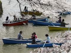 Tokio, de rosa: festivales para ver los cerezos en flor