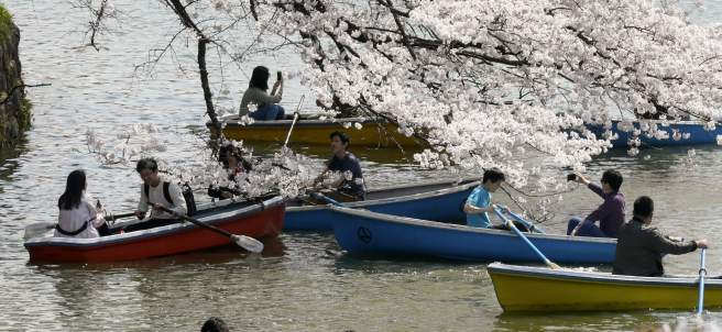 Los cerezos florecen con adelanto