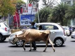 Censo de vacas en una ciudad india