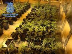 Piden cárcel para los dueños de un club cannábico por la venta indiscriminada de marihuana