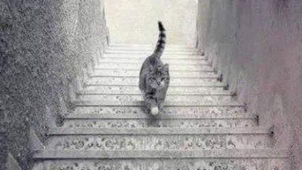 El gato que sube o que baja la escalera, el nuevo truco óptico que divide a Internet