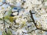 Primavera en la Baja Sajonia