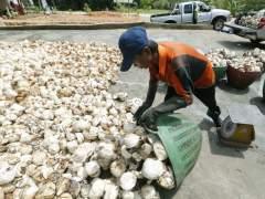 La demanda de caucho amenaza los bosques en el Sudeste Asi�tico