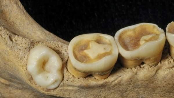 Mandíbula de un individuo localizado en la Cueva El Mirador en Atapuerca.