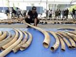 Tráfico de marfil en Tailandia