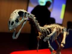"""El Chilesaurio podría ser el""""eslabón perdido"""" entre dos familias de dinosaurios"""