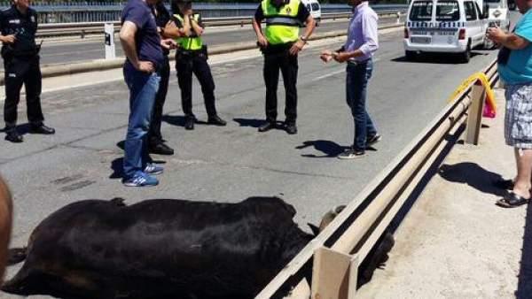Un toro se escapa y hiere a 10 personas en Talavera