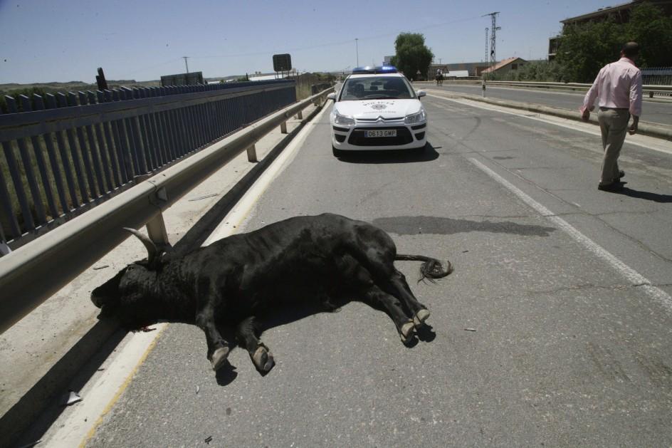Once personas heridas tras escaparse un toro en Talavera