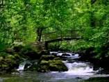 Cascada hipnótica