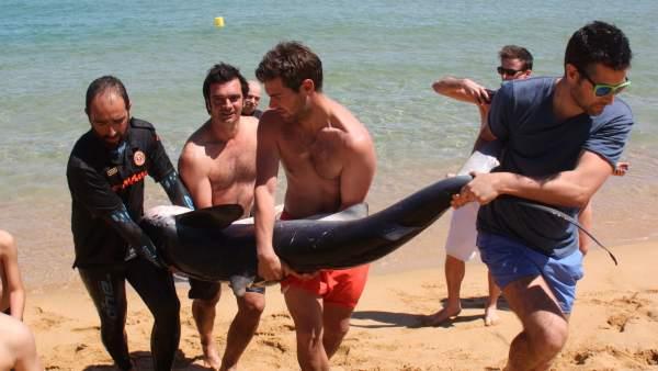 Hallan un tiburón en la playa de Santa Cristina d'Aro