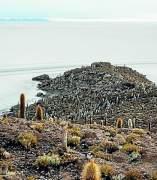 Isla Incahuasi, Salar de Uyuni (Bolivia)