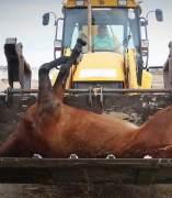 Maltrato animal en El Roc�o
