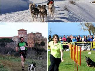 Mushing, Canicross y Agility