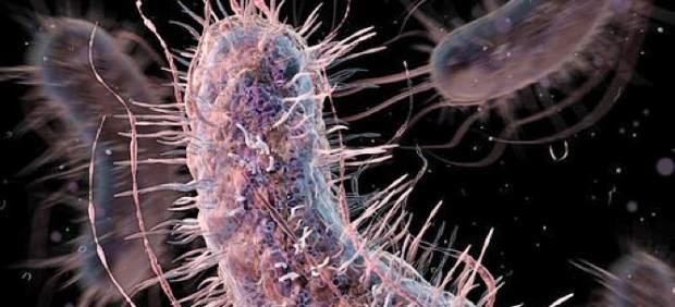 Bacterias sintéticas diseñadas