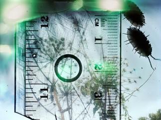 Stephen Gill - Untitled aus der Serie Talking to Ants, 2009-2012