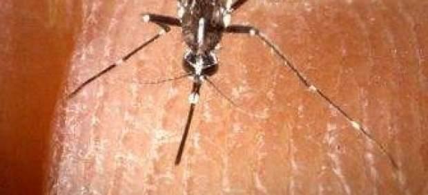 Qué me ha picado? Cada insecto deja su propia marca en la piel ...