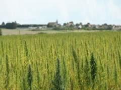 Cuatro de cada cinco jóvenes atendidos por Projecte Home en 2015 consumían cannabis