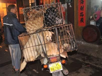 Perros para comer