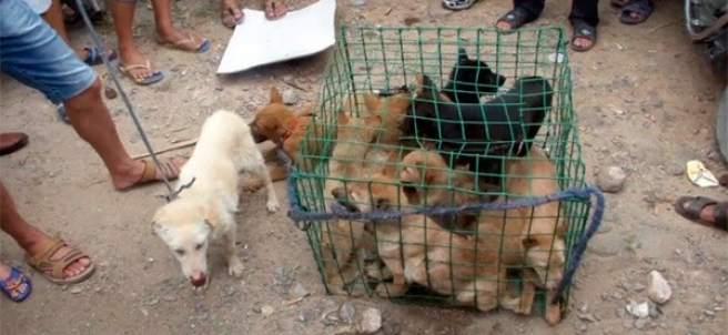 Protestas por el consumo de carne de perro