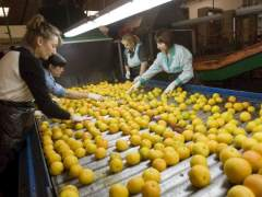 Casi un tercio de las mujeres europeas trabajan a tiempo parcial