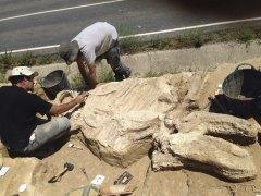 Descubren en La Rioja un rinoceronte de 3 millones de a�os