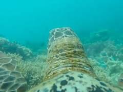El Gran Arrecife de Coral desde el punto de vista de una tortuga