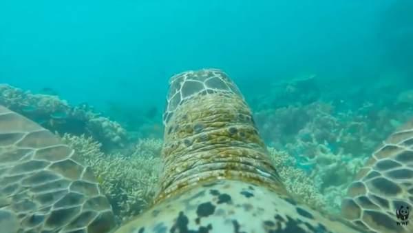 Una tortuga con cámara