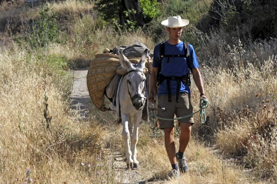 Fotoperiodismo en burro