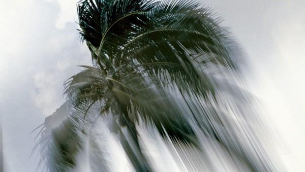 Piotr Uklański (born Poland, 1968) - Untitled (Coconut Tree), 1998