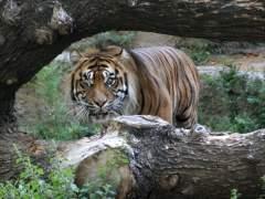 El Zoo de Barcelona retirará cerca de un centenar de especies