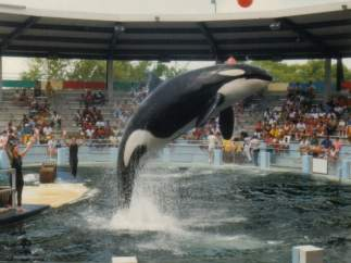 Orca Lolita