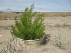 Olivares vivos, algas y cubetas para plantas contra la desertificaci�n