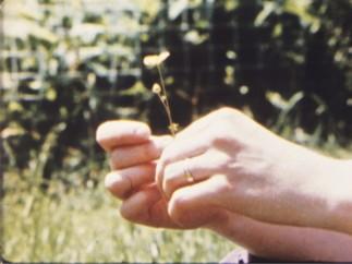 Jonas Mekas, 'As I was moving ahead occasionally I saw brief glimpses of beauty', (filmstill) , 2000