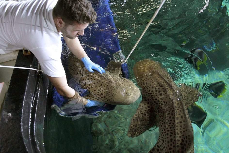 Entrenando tiburones para soportar análisis