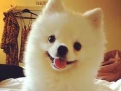 El estornudo de un perro logra en pocos d�as millones de visitas en YouTube
